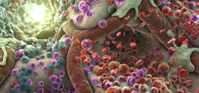 anemie u kojencu preparatele de vierme hel